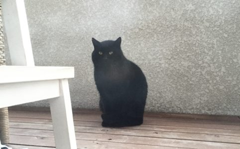 ベランダから、置物のような姿でこちらを見る黒ねこ